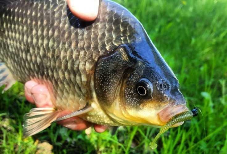 Рыбалка в мае на плотву, карася
