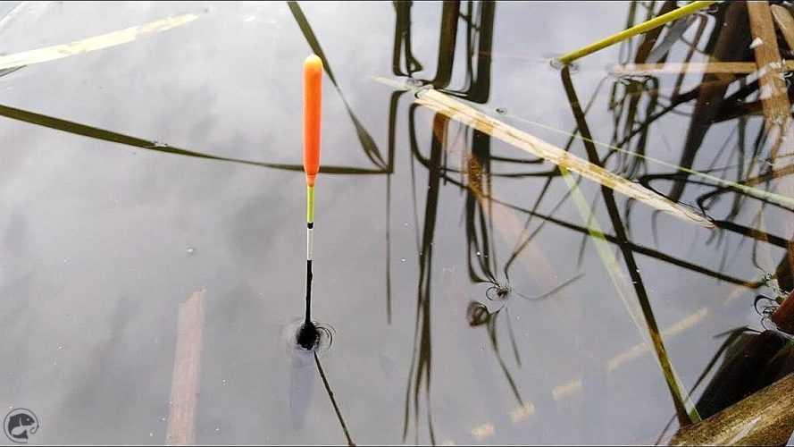 Подготовка к рыбалке на весеннюю плотву