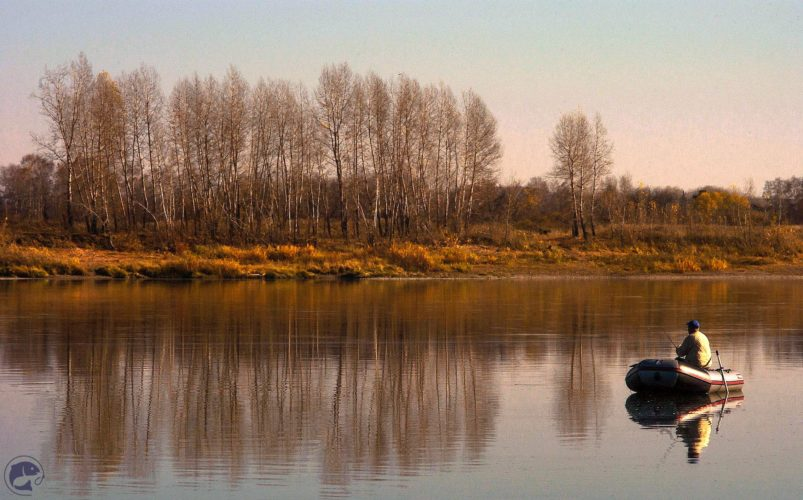 Ловим предзимнего рыбца на Дону в проводку